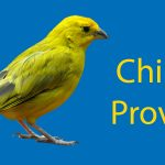 Chinese Proverbs: 9 Must Know Chinese Sayings Thumbnail
